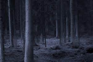 Dark Spooky Forest at Night