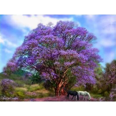 beautiful trees wallpaper - Mobile wallpapers