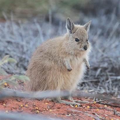 Animals Uluru Park Kata Tjuta Guided Ranger