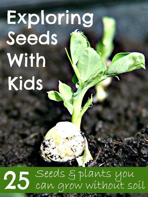 exploring seeds  kids  seeds plants