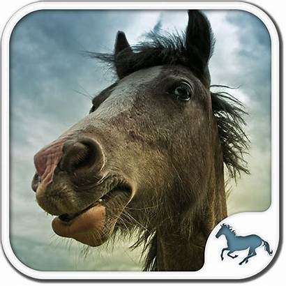 Horse Puzzles Games Apps Puzzle Cool Adults