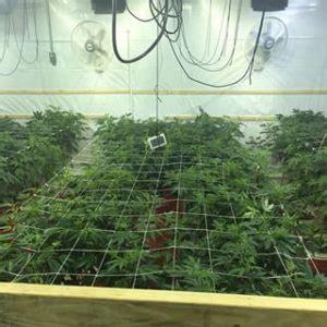 marijuana netting marijuana nettingnet