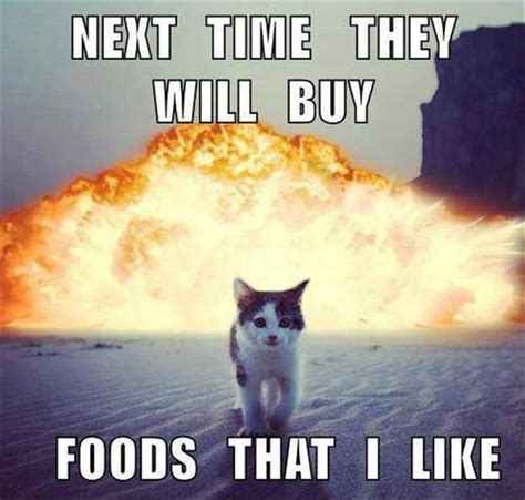 Funny Meme Saying - the 25 best cat memes ideas on pinterest funny cat memes funny kittens and funny cat pics