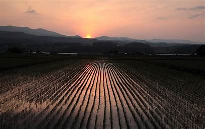 Field Rice Sunset Cool Nature 2560 1600