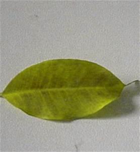 Stickstoffmangel Bei Pflanzen : garten ~ Lizthompson.info Haus und Dekorationen