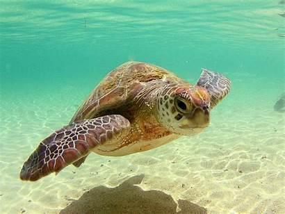 Wallpapers Turtles Turtle Sea