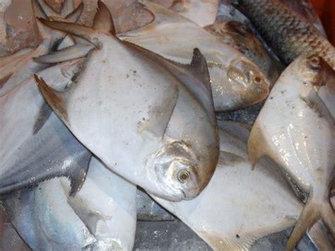 eating   fish detrimental  health worldnewscom