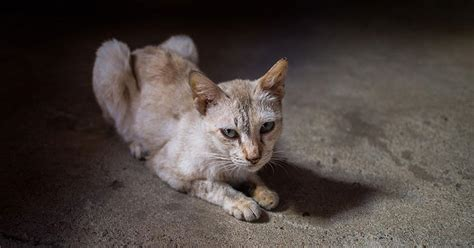 Don't Let Your Senior Cat Become A Skinny Old Kitty