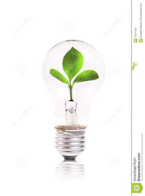 eco concept lightbulb with green plant inside royalty