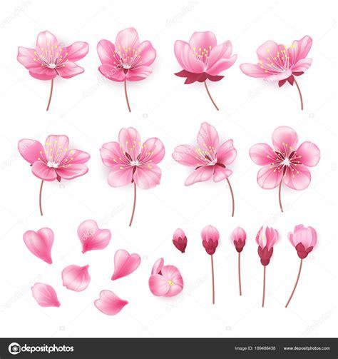 fiore giapponese disegno giapponese cinese fiori www miglioreimmagini