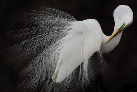audubon photography awards winners audubon