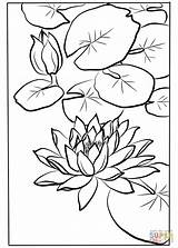 Lily Coloring Water Pages Drawing Shodo Kawarazaki Printable Flowers Drawings Line Nata Getdrawings sketch template