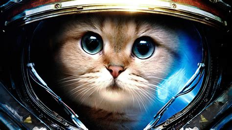 Space Cats Hd Wallpaper (78+ Images