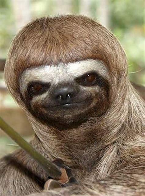 pin  sloths