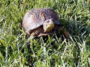 Comment Savoir Si Une Voiture Est Volée : comment savoir si ma tortue est un m le ou une femelle ~ Medecine-chirurgie-esthetiques.com Avis de Voitures