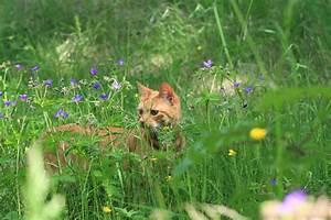 Welche Pflanzen Sind Für Hunde Giftig : welche pflanzen sind giftig f r katzen downloadliste ~ Watch28wear.com Haus und Dekorationen