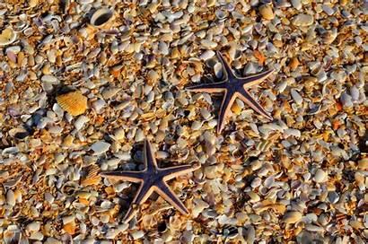 Starfish Equinodermos Seashell Sea Water Marine Underwater