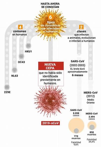 Coronavirus Infobae Virus Enfermedad Atemoriza Mundo Nueva
