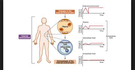 How Organisms Maintain Homeostasis