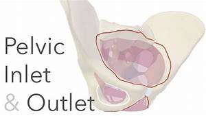 What Is The True Pelvis  - Pelvic Inlet  U0026 Outlet Anatomy