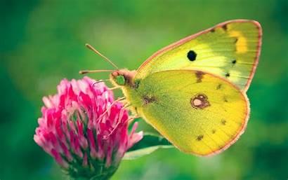 Butterfly Wallpapers Butterflies Desktop Backgrounds Pretty Nature
