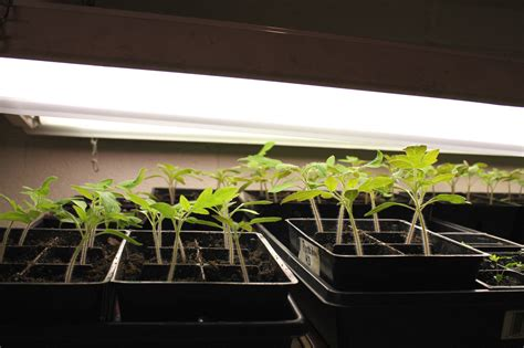 Fluorescent Grow Lights Why T5 Lights Are The Best Grow