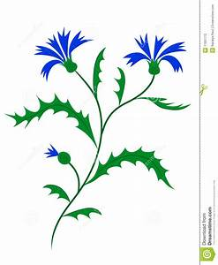 Vector Cornflower Stock Photography - Image: 11931772