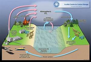 15 Best Images About Carbon Cycle On Pinterest