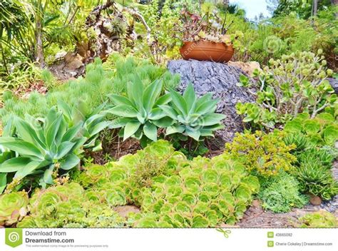 17 best images about gardens on slopes on pinterest