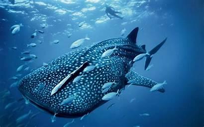 Sea Wallpapers Animals Ocean Creature Fish Latest