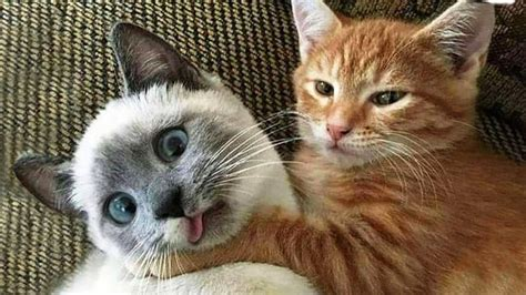 funniest cats  dogs awesome animals  world