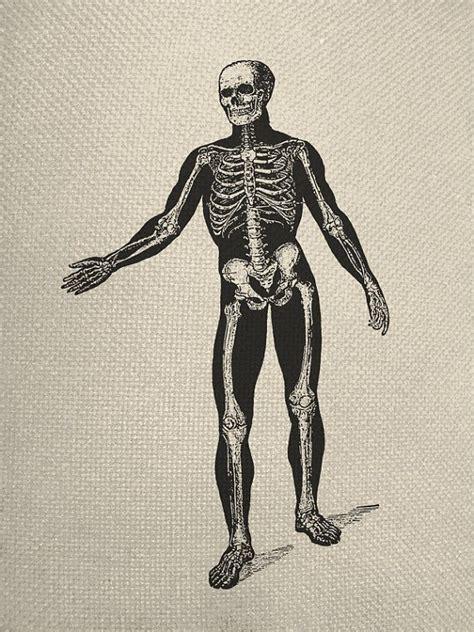 holloween vintage style human skeleton system silhouette