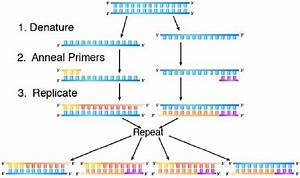8 7  Polymerase Chain Reaction  Pcr