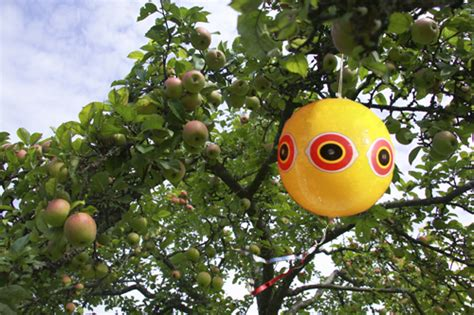 scare eye balloon bird scarer protect crops buy online