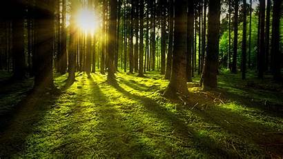 Nature Forest Landscape Tree Background Sunbeams Widescreen