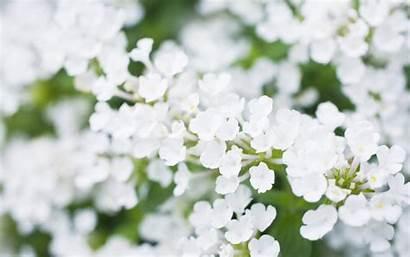 Flowers Flower Wallpapers Skin Desktop Backgrounds Computer