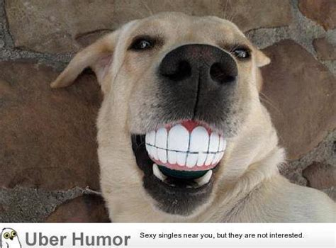 funny dentists home facebook
