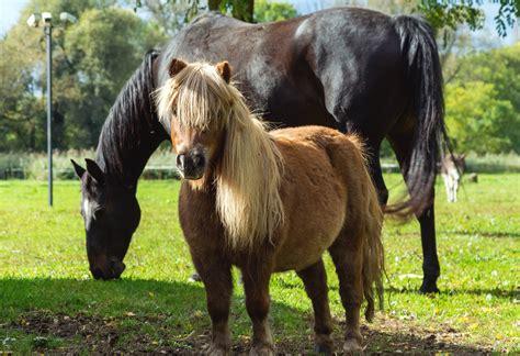 horse   pony  image  libreshot