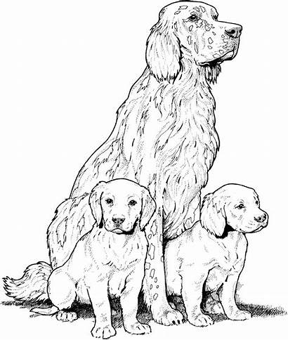 Coloring Dog Pages Golden Breed Retrievers