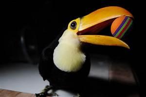 Baby Toucan | www.imgkid.com - The Image Kid Has It!