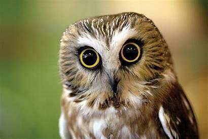 Owls Owl