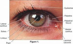 Eye Makeup For Blepharitis Sufferers