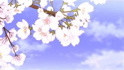 Aesthetic Blossom Cherry Moving Backgrounds Flowers Gifs