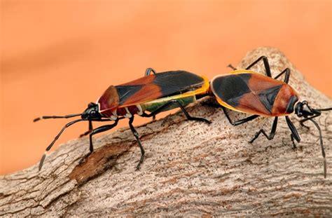 Gallery  Pest & Diseases  Organic Gardener Magazine