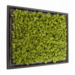 preserved lichen moss wall art in frame 20in x 24in With moss wall art