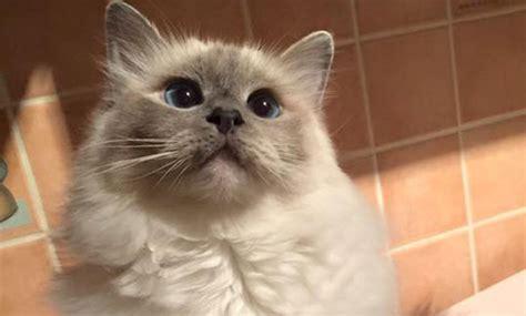Bindehautentzündung Katze Kosten