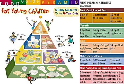 early childhood the of a child 135 | foodservings pyramid