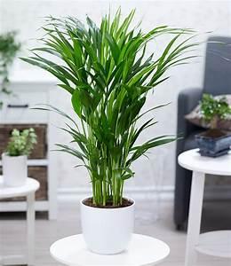Pflanzen Für Gesundes Raumklima : gesundes raumklima durch zimmerpflanzen ~ Indierocktalk.com Haus und Dekorationen