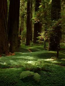 Peaceful Places... Forest Floor Quotes