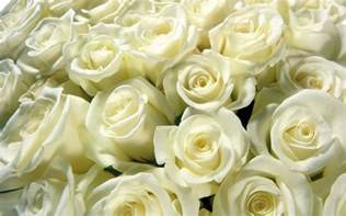 wedding bouquet quelle est la signification des roses blanches